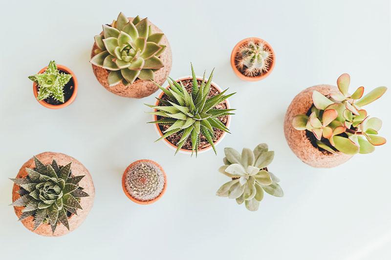 Plantas en casa