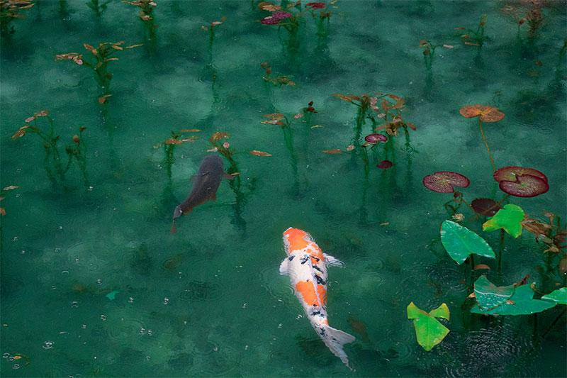 Una vez amé a un pez, por Florencia Mieres Van der Werf
